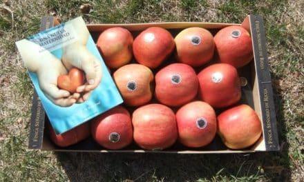 Las manzanas de Señorío de Rioja en Igea
