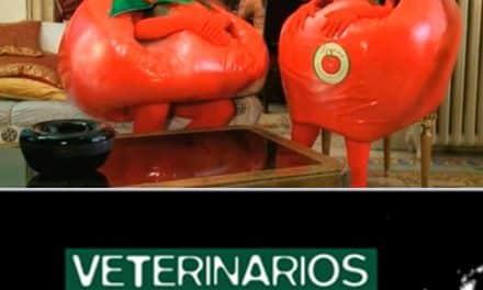 DOS TOMATES Y DOS DESTINOS: ¿qué le diría un tomate transgénico a otro campesino?
