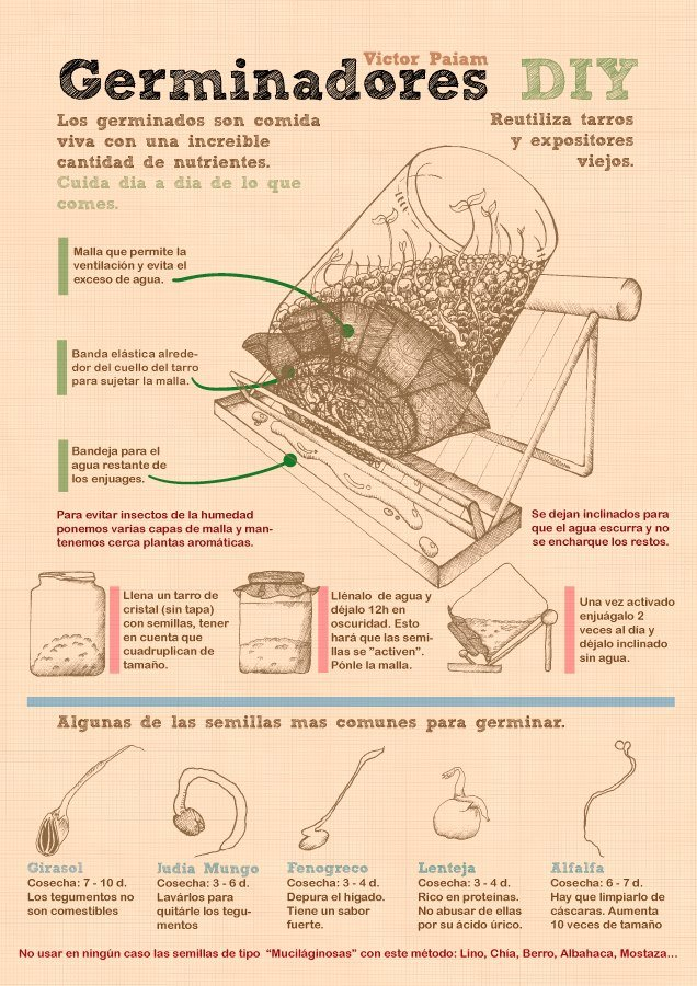 Germinadores DIY y hierba de trigo (3 infografías)