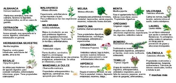 Plantas aromáticas y sus propiedades: ¡qué no falten en tu cocina!